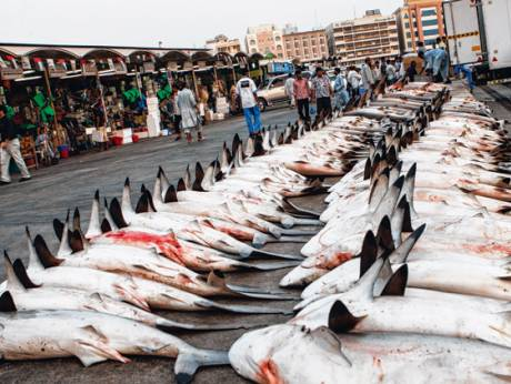 Shark finning clear and present danger for San antonio fish market