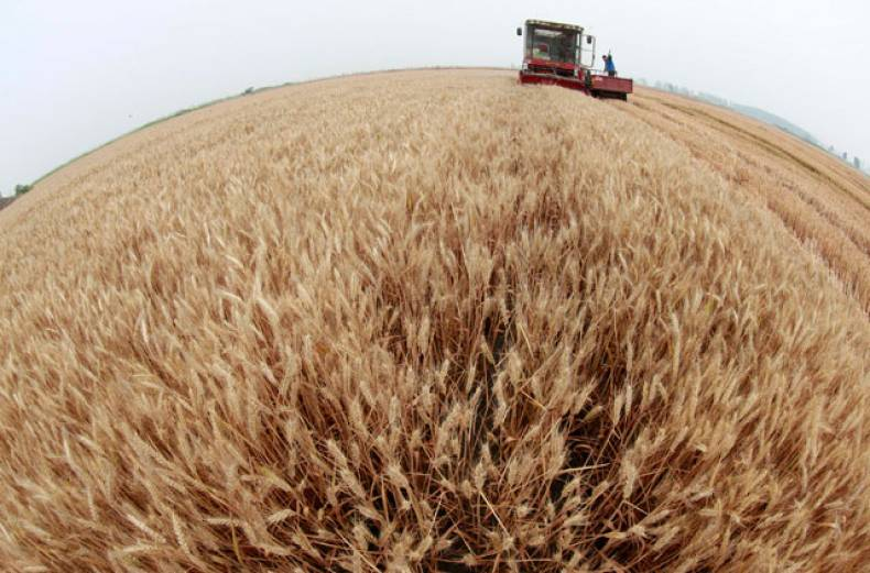 a-farmer-operates-a-harvester-at-a-wheat-field-on-the-outskirt-of-huaibei-anhui-province-in-china