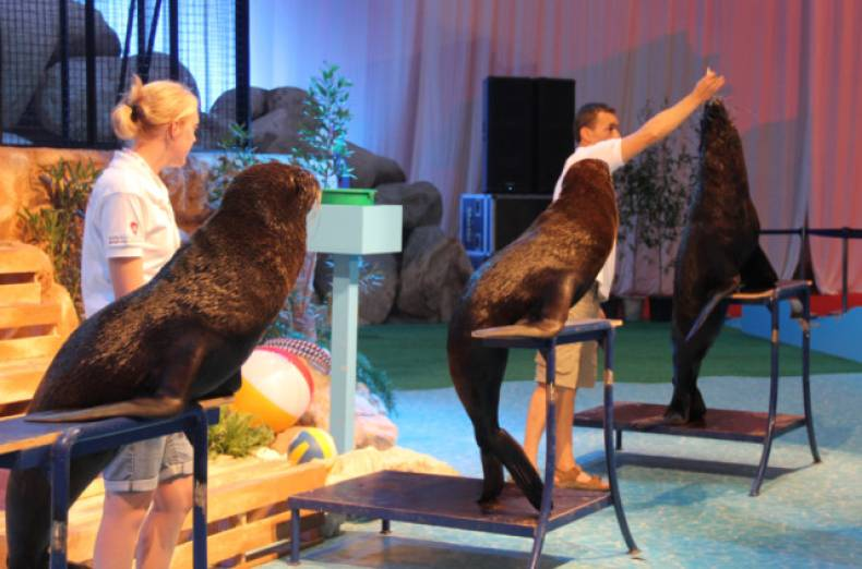 sea-lions-perform-during-the-summer-in-abu-dhabi-2012-festival