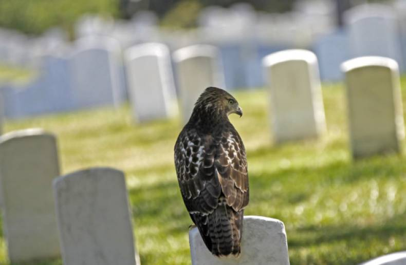 copy-of-headstone-perch-jpeg-03da4