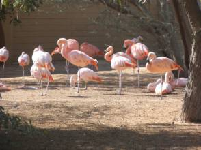 In pictures: Al Ain Zoo