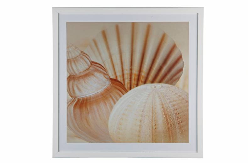 shell-picture
