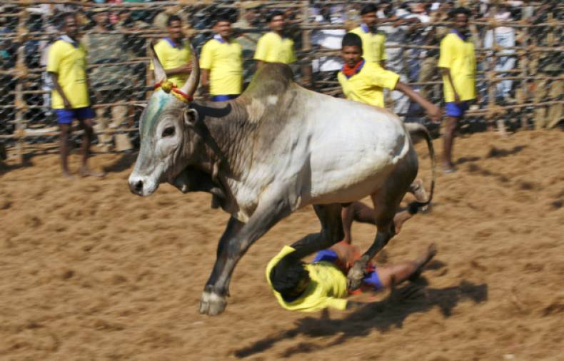 copy-of-india-bull-taming-jpeg-0d3d0