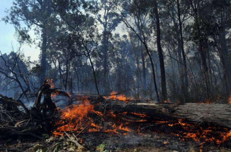 copy-of-australia-wildfires-jpeg-039f1