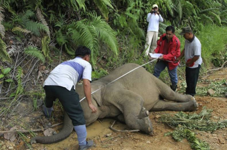 copy-of-malaysia-elephant-deaths-jpeg-00e1b