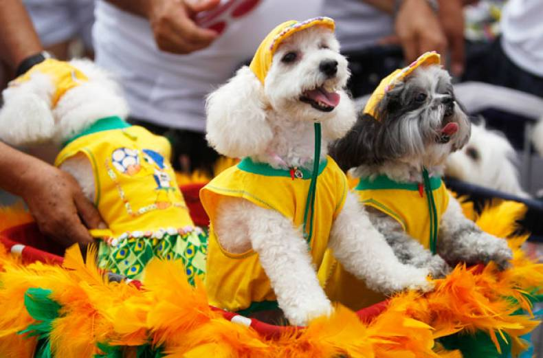 dogs-wear-brazil-s-national-soccer-team-jerseys-during-the-blocao-dog-carnival-parade