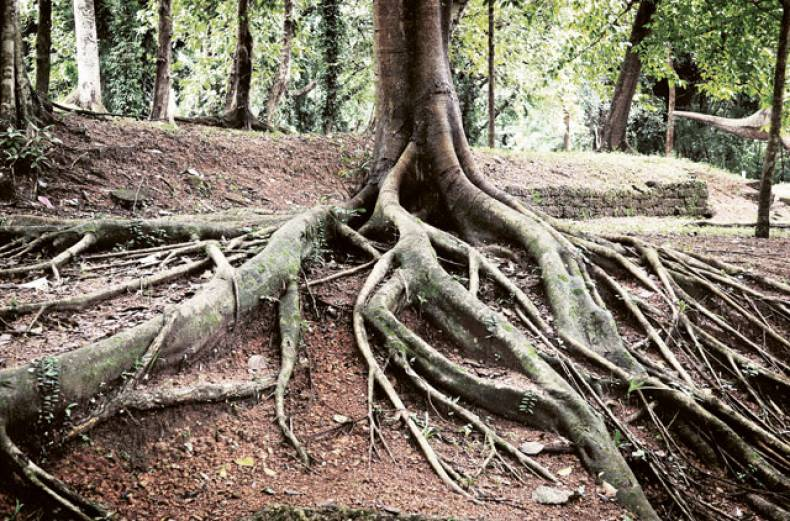 rooted-in-nature