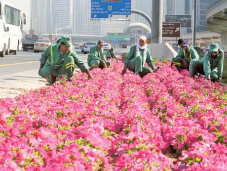 Flower Planting Drive Keeps Dubai In Bloom