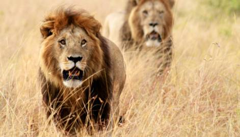 Masai Mara greatest wildlife spectacle on earth
