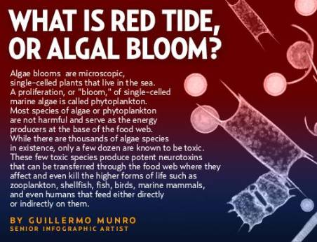 an analysis of the harmful algal blooms the red tides