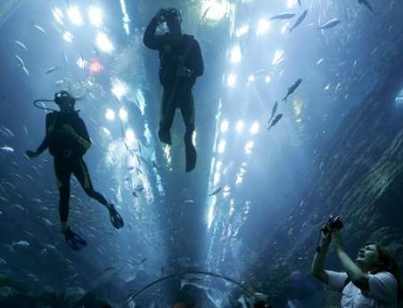 Dubai mall aquarium cracked and leaking for How to fix a leaking fish tank