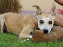 10 pets looking for a home in the UAE