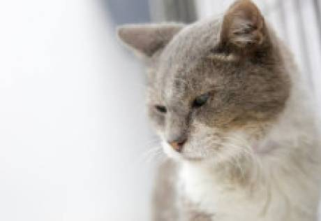 An abandoned cat looks for a home