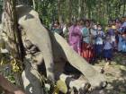 Elephant electrocuted in Assam, India