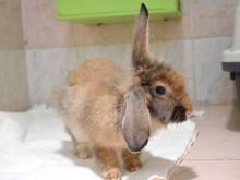 Looking for a new pet? Floppy is all ears