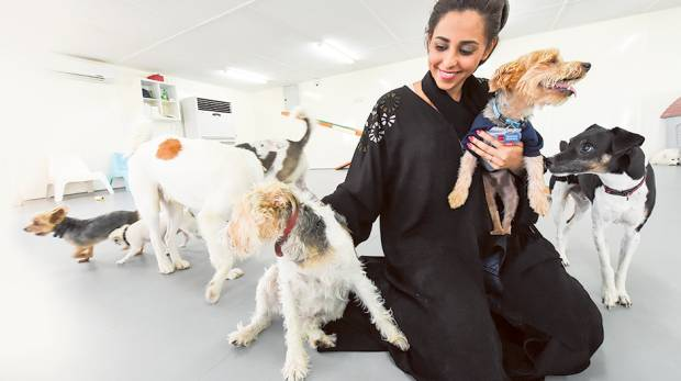 a hotel for your pet in abu dhabi gulfnews