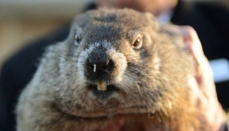 US Groundhog Phil predicts early spring
