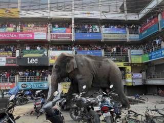 Wild elephant goes berserk in India town