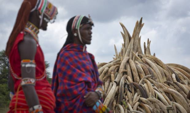 Kenya to burn confiscated ivory