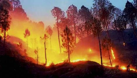 Uttarakhand forest fires under control