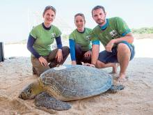 UAE to track sea turtles for four years