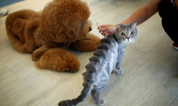 Pet grooming: Hair today gone tomorrow