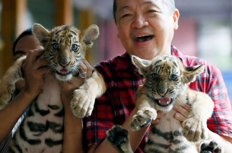copy-of-philippines-tiger-cubs-jpeg-77c31