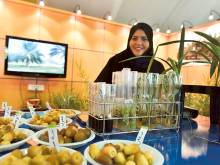 UAE researchers grow date palm in three years