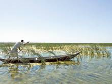 The vanishing marshes of southern Iraq