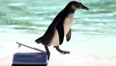 Animal weigh-in begins in London zoo