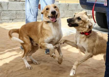 Pair of pups abandoned for their size