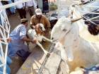 45 illegal butchers caught during Eid in Dubai