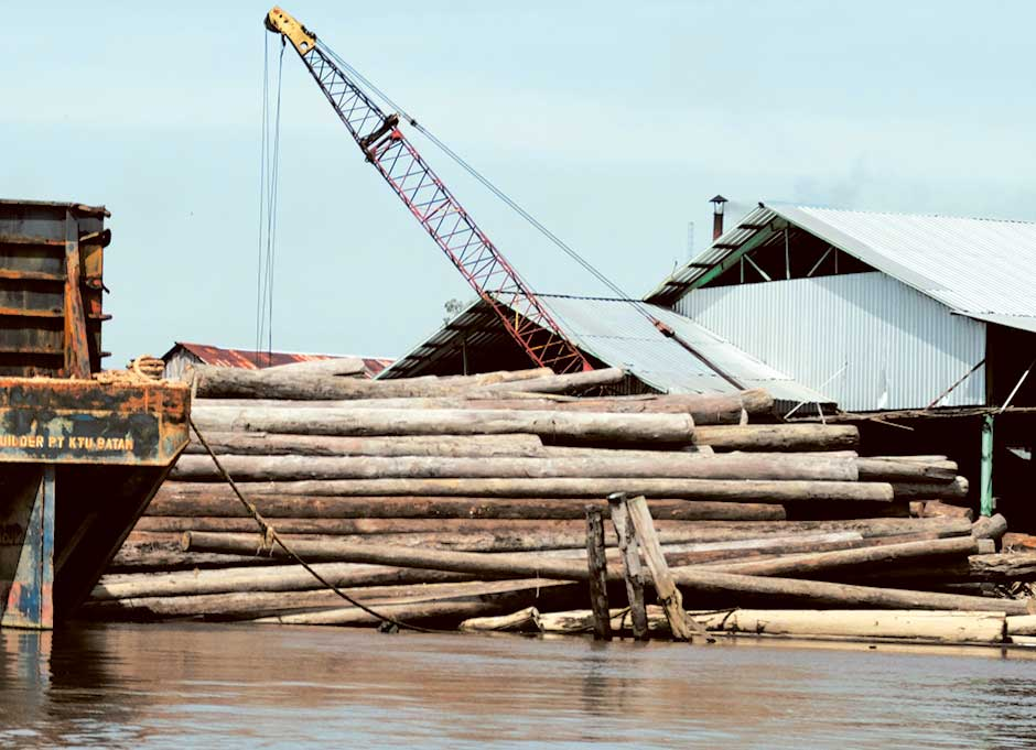Collected logs on in Manjau.