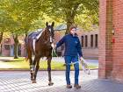 AUE to offer equine related  college degrees