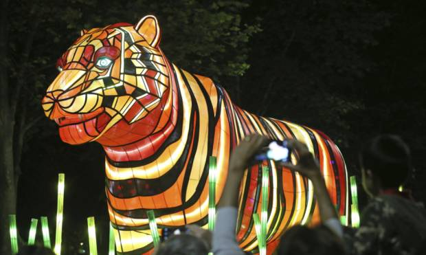 Animal Light Sculpture parade in Sydney