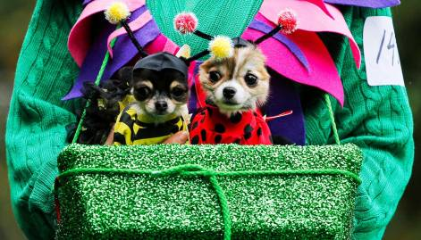 Halloween Dog Parade: in pictures