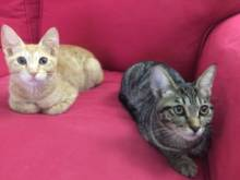 Adopt these in a pair, they are inseparable
