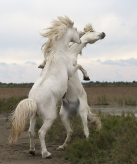 Essays About Horses