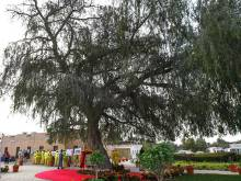 All ghaf trees in Dubai to be numbered