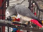 Dh5,000 reward to find missing parrot
