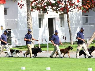 Meet sniffer dog who solved RAK burglary