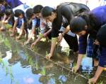 Students learn rice farming in Sharjah
