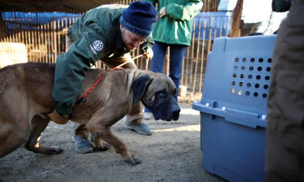 Canines rescued from a dog meat farm