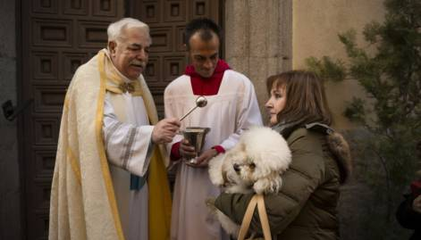 Pets get blessed on St. Anthony's day in Spain