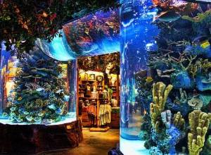 3 Dubai restaurants with Aquarium views
