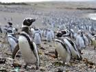 Abundant fish draw 1m penguins to Punta Tombo