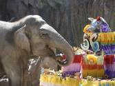 Elephant blows out 56 candles on birthday cake