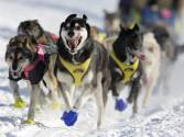 Iditarod mushers begin race across Alaska