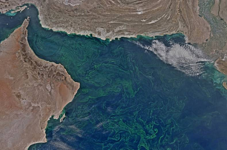copy-of-oman-algae-57791-jpg-5e33c