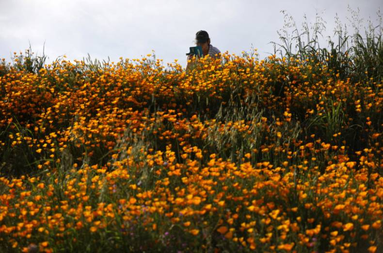 copy-of-2017-03-15t025342z-1015122301-rc193fa78040-rtrmadp-3-california-flowers